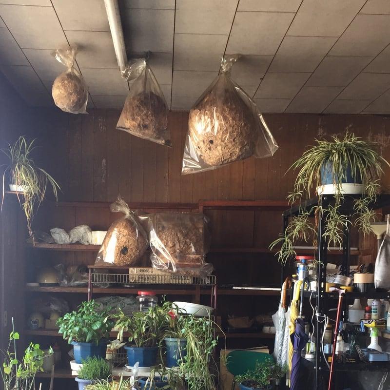高幸食堂 秋田県大仙市 店内 ハチの巣