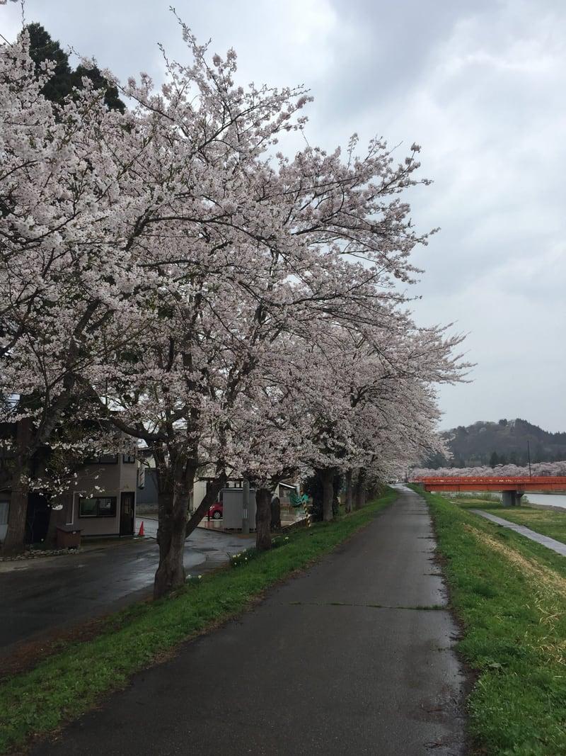 桜美食堂 秋田県仙北市角館町 桧木内川 桜並木 花見