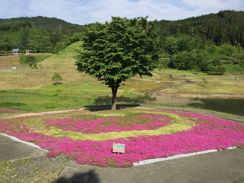 大松川ダム芝桜公園 秋田県横手市三内