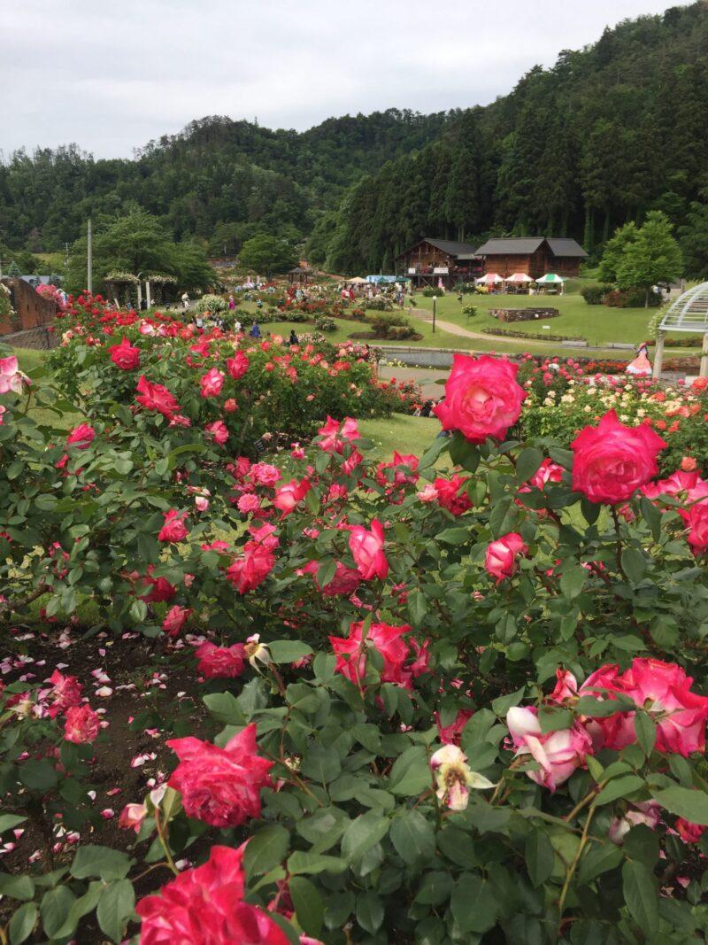バラまつり2019 山形県村山市 東沢バラ公園